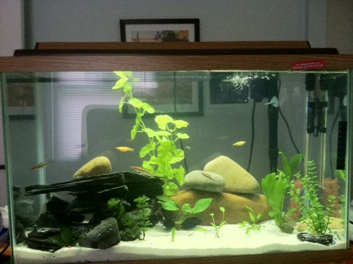 30 gallons freshwater fish tank (mostly fish and non-living decorations) - 5 x Zebra Danio 2 x GloFish 3 x Roseline Shark 2x Cryptocoryne wendtii, 2x annubias, 1 x amazon sword