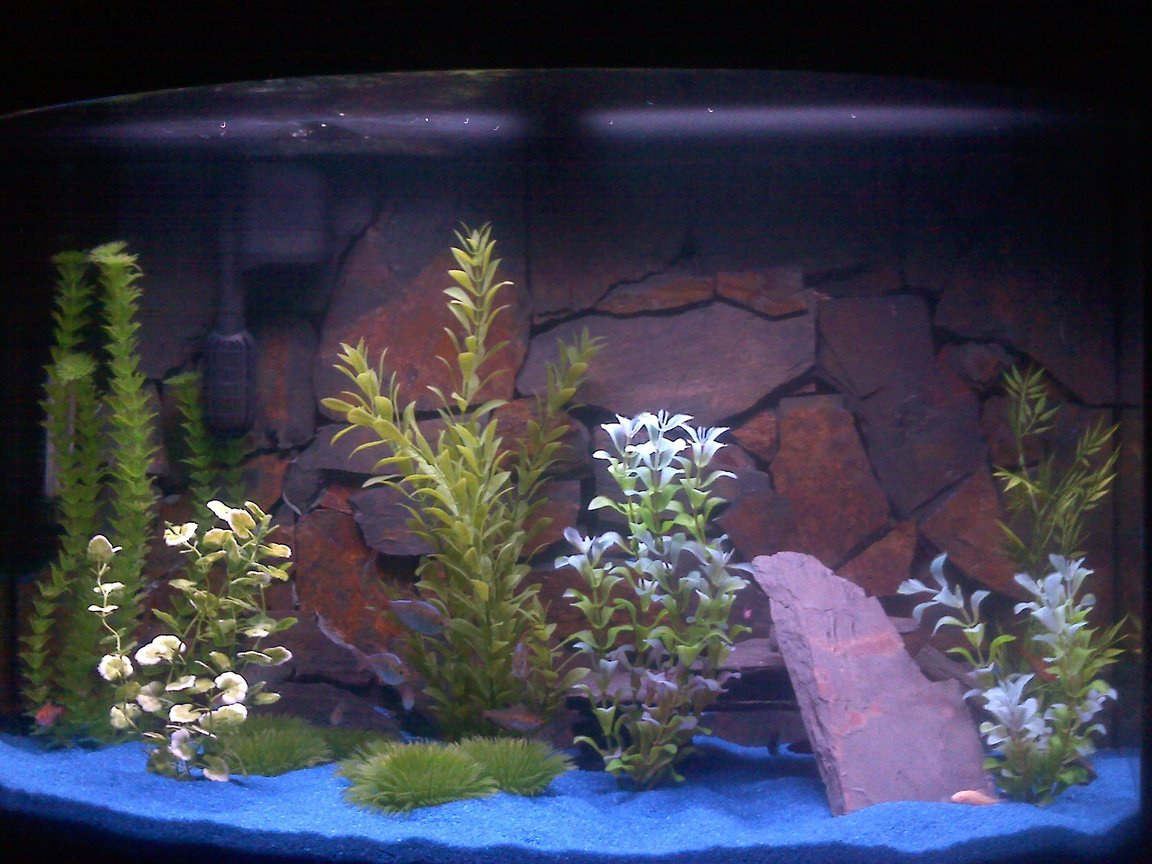 37 gallons freshwater fish tank (mostly fish and non-living decorations) - fish tank