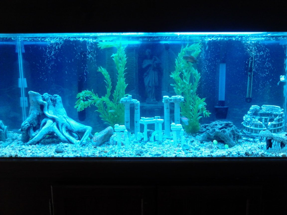 75 gallons freshwater fish tank (mostly fish and non-living decorations) - My 75 gallon