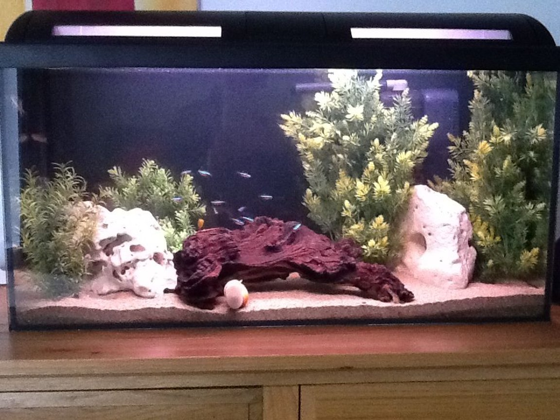 20 gallons freshwater fish tank (mostly fish and non-living decorations)