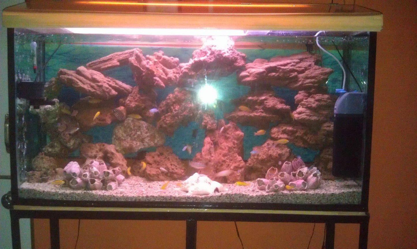 75 gallons freshwater fish tank (mostly fish and non-living decorations) - Chichlid Community tank