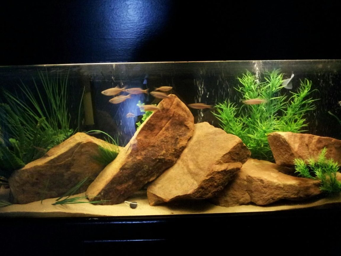 freshwater fish tank (mostly fish and non-living decorations) - 55 Gallon. Sand, Sandstone, and fake plants. Ten Giant Danios and Four Polka Dot Loaches.