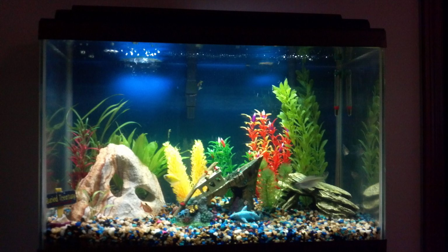 20 gallons freshwater fish tank (mostly fish and non-living decorations) - my tank