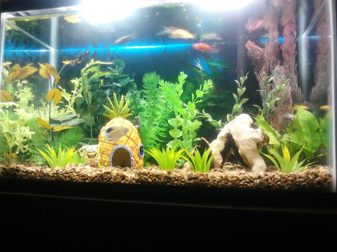 10 gallons freshwater fish tank (mostly fish and non-living decorations)