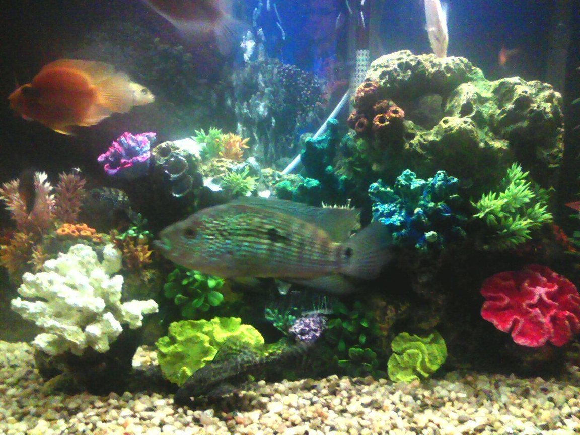 30 gallons freshwater fish tank (mostly fish and non-living decorations) - 40 gallon with chiclids only