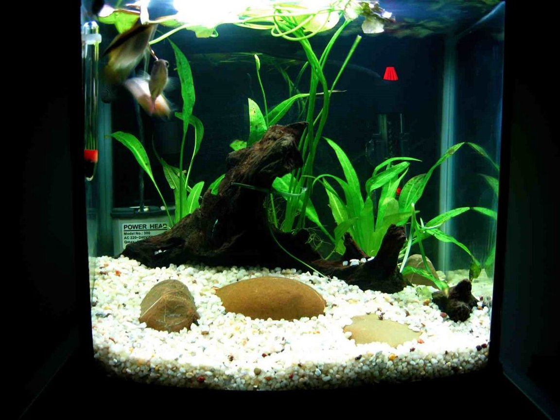 5 gallons freshwater fish tank (mostly fish and non-living decorations) - tank 4