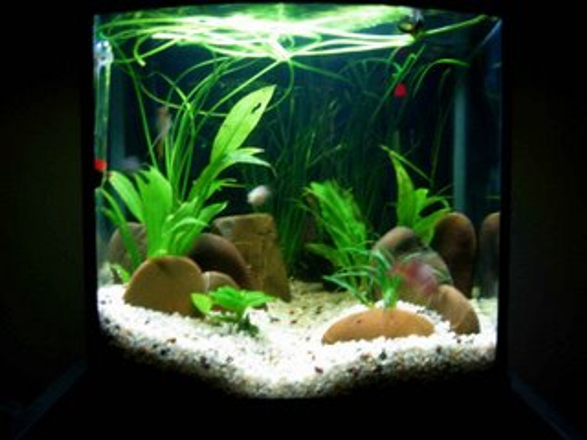 5 gallons freshwater fish tank (mostly fish and non-living decorations) - Tank 2