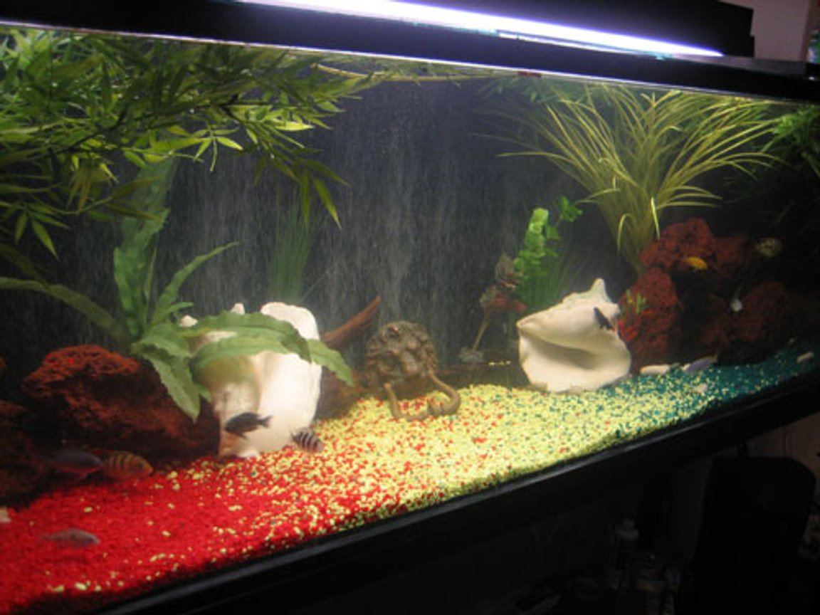 110 gallons freshwater fish tank (mostly fish and non-living decorations) - Rastaman Tank!