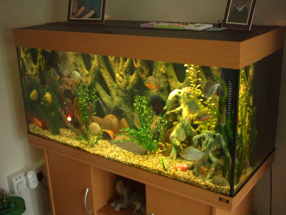 66 gallons freshwater fish tank (mostly fish and non-living decorations) - my fave tank.