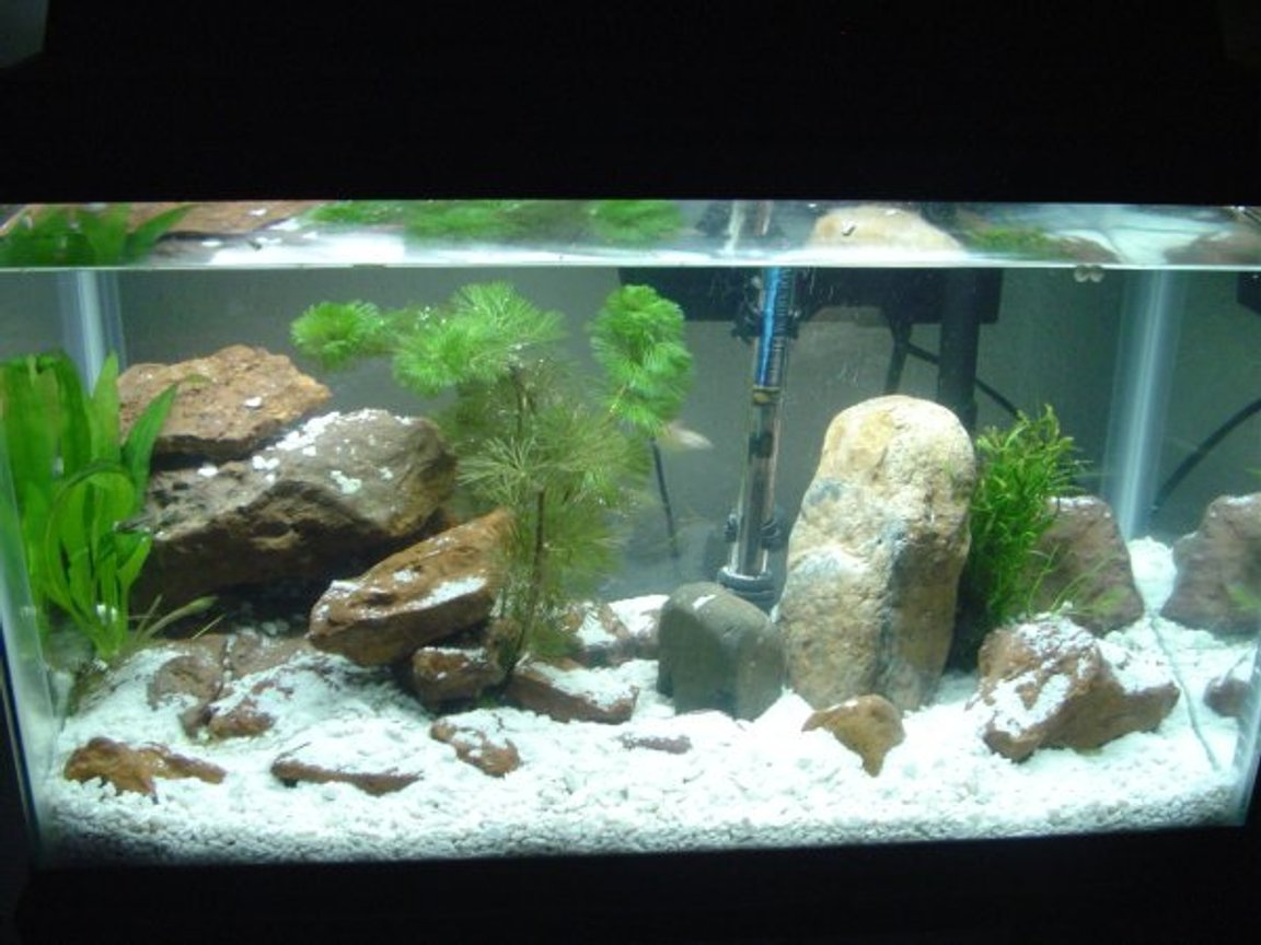 10 gallons freshwater fish tank (mostly fish and non-living decorations) - This is my 10 gallon setup.