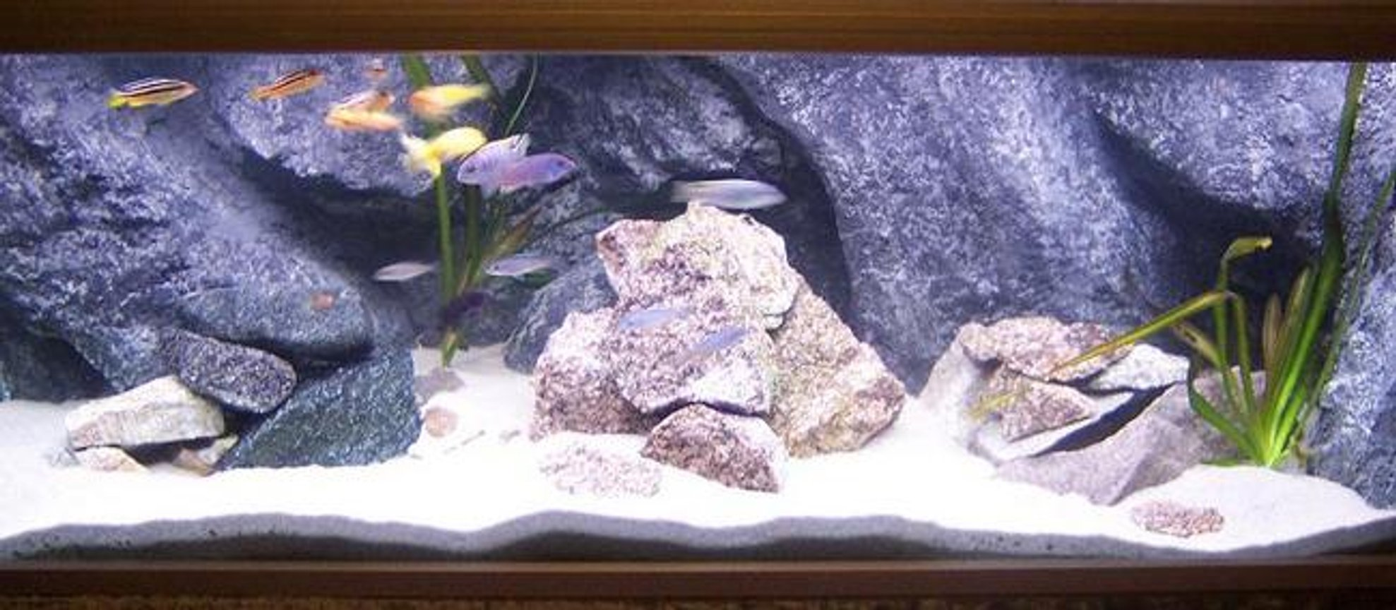 50 gallons freshwater fish tank (mostly fish and non-living decorations) - this my big tank