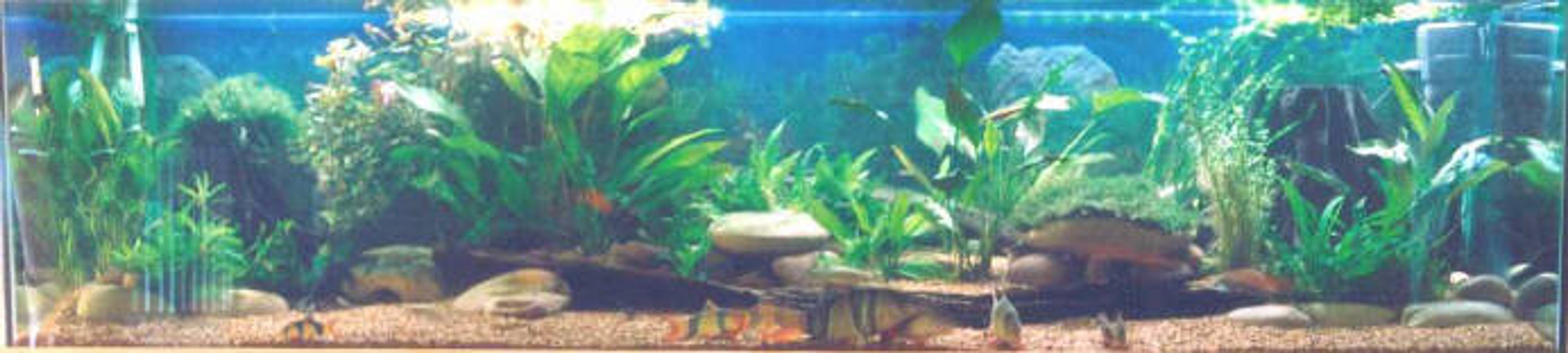 250 gallons freshwater fish tank (mostly fish and non-living decorations) - community tank