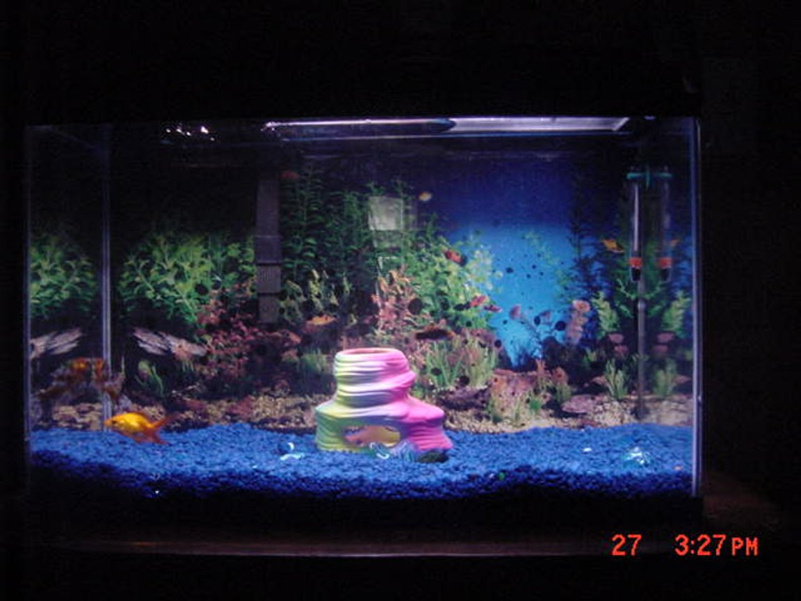 10 gallons freshwater fish tank (mostly fish and non-living decorations) -