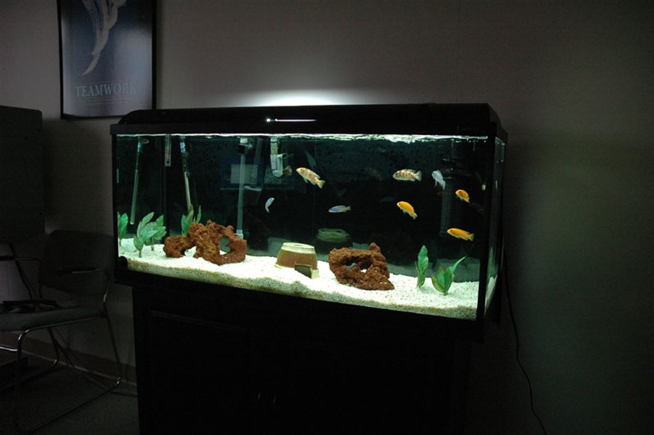 58 gallons freshwater fish tank (mostly fish and non-living decorations) - All African Cichlids. Semi Aggressive Tank. 58 Gallon Hagen 120 GeoSystem Kit. Fluval 404, Magnum 350 with micro filter,AquaClear 70 with quick filter, TurboTwist UV 9w sterilizer. 50 pounds of white aquarium gravel. Red Lava Rock, plastic plants.