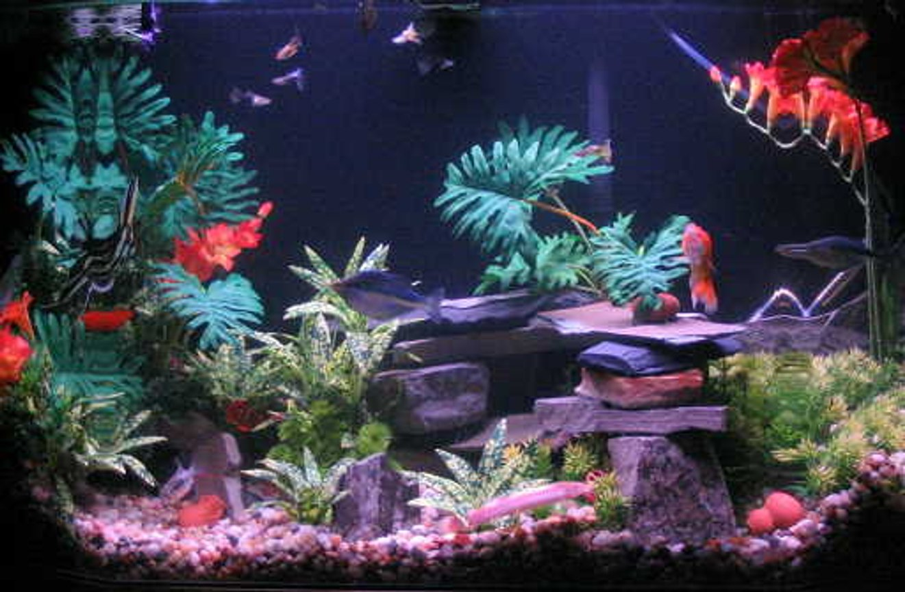 45 gallons freshwater fish tank (mostly fish and non-living decorations) - My 'tropics' setup.The blurred sections are the tank corners. Wish it wouldn't skew the pic like that, but it looks nice in person.
