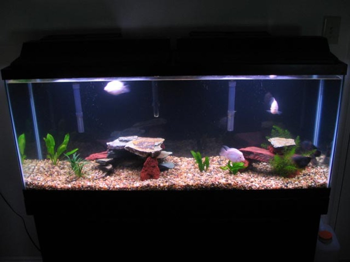 55 gallons freshwater fish tank (mostly fish and non-living decorations) - My first tank. Simple is elegant...
