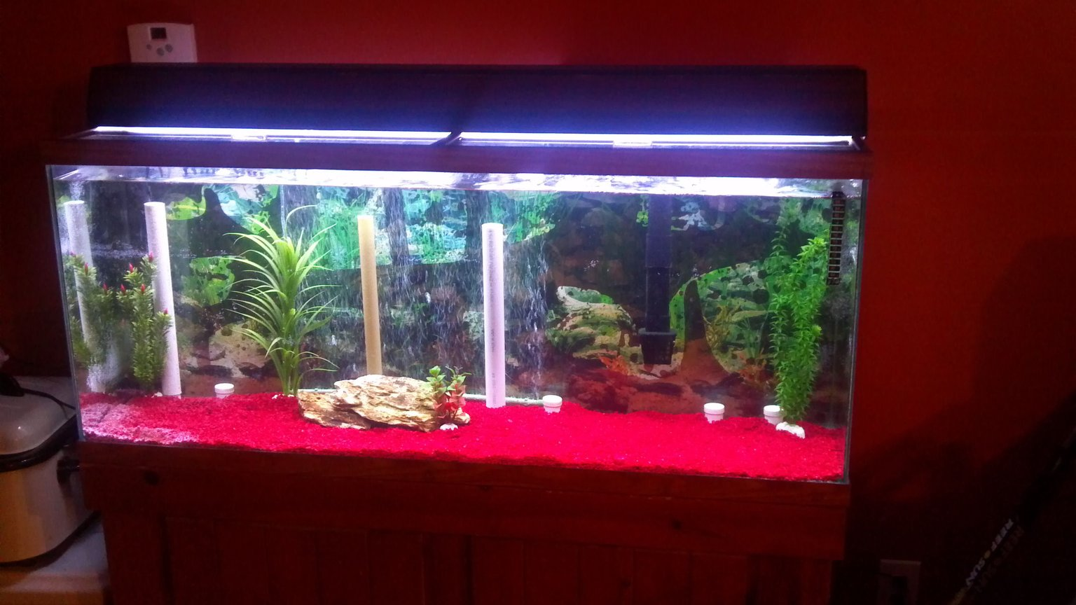 55 gallons freshwater fish tank (mostly fish and non-living decorations) - Old tank
