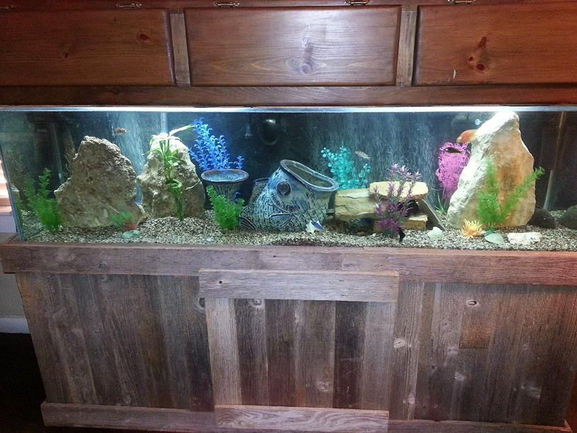 100 gallons freshwater fish tank (mostly fish and non-living decorations) - 100 Gallon Fresh Water Tank