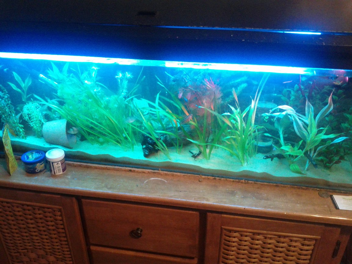 15 gallons freshwater fish tank (mostly fish and non-living decorations) - just my little 4ft tank :)