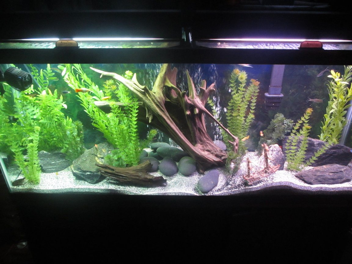 55 gallons freshwater fish tank (mostly fish and non-living decorations) - HOLIDAE HUSTLEZ 55 gallon Freshwater...23 fish of all sorts, 2 snails, 1 pleco