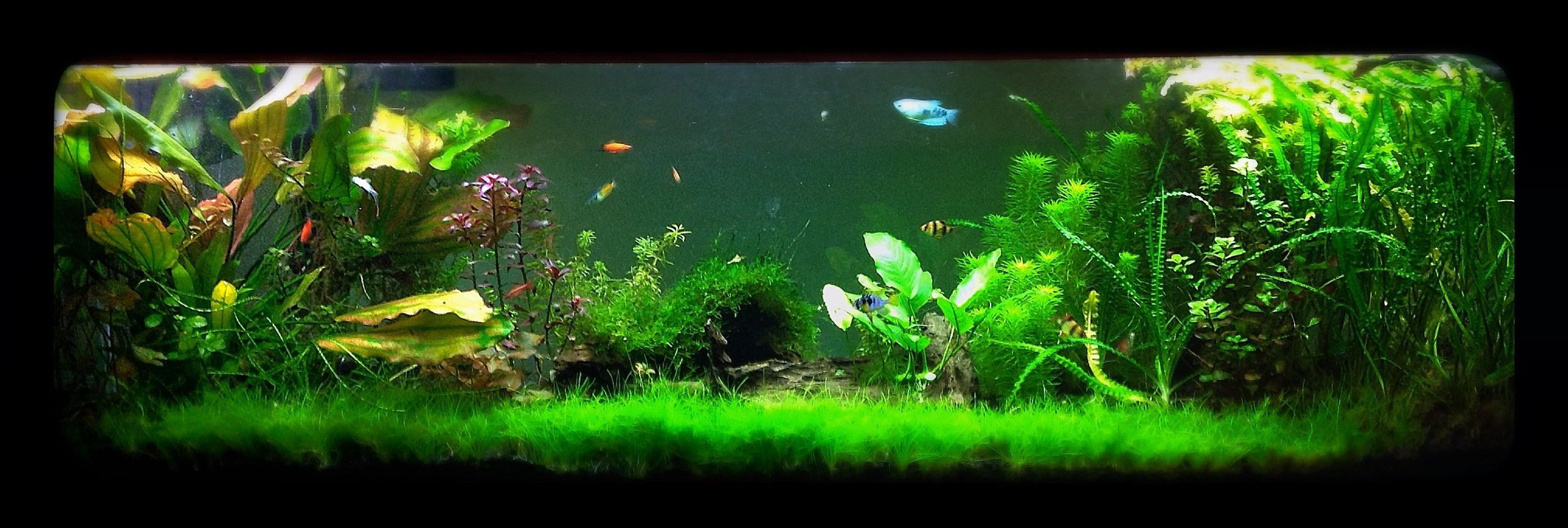 125 gallons freshwater fish tank (mostly fish and non-living decorations) - 125 gallon tank