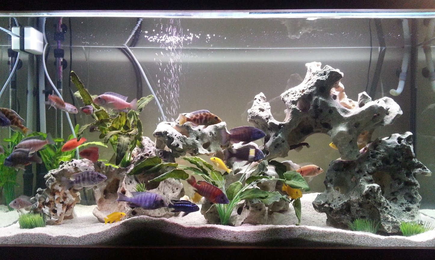 85 gallons freshwater fish tank (mostly fish and non-living decorations) - 85 Gallon freshwater aquarium with texas holey rock and decorative plants, Changed it up after 3 years so give it something new.