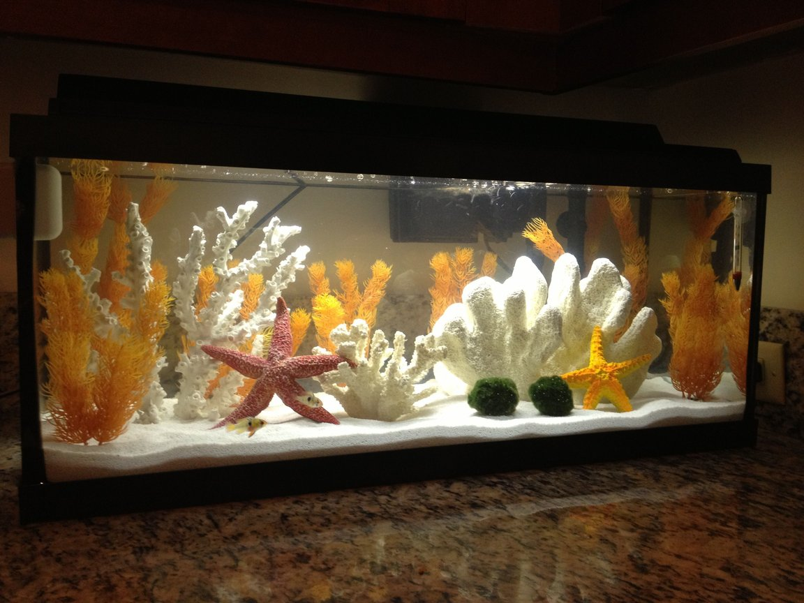 20 gallons freshwater fish tank (mostly fish and non-living decorations) - My tank, 20 gallon long