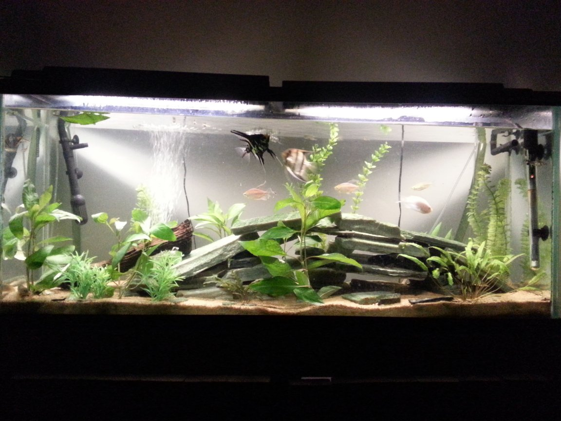 55 gallons freshwater fish tank (mostly fish and non-living decorations) - 55g freshwater community tank with some live plants