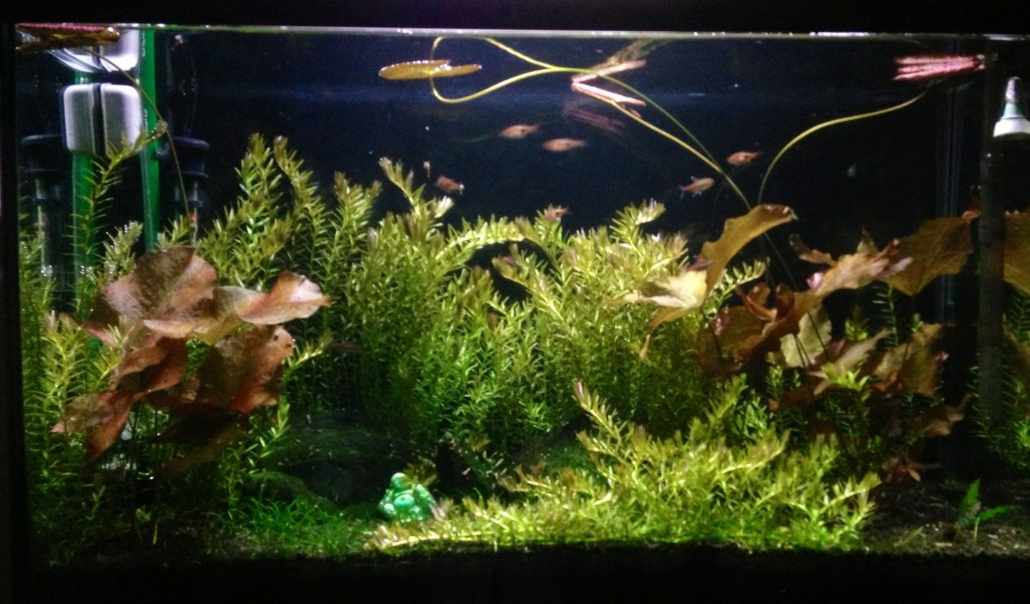 29 gallons freshwater fish tank (mostly fish and non-living decorations) - Matured 29g