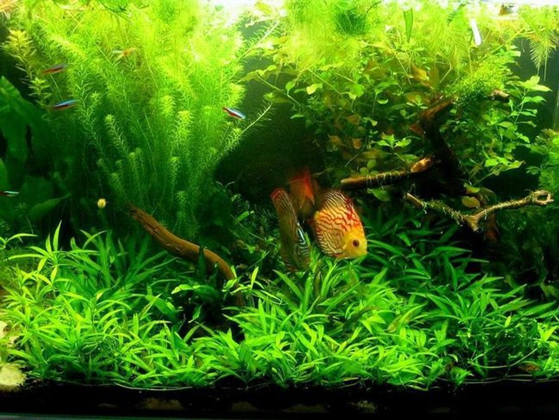 freshwater fish tank (mostly fish and non-living decorations) - -