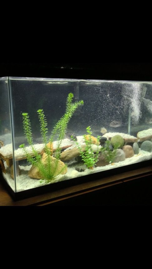 29 gallons freshwater fish tank (mostly fish and non-living decorations) - 30 gallon beauty