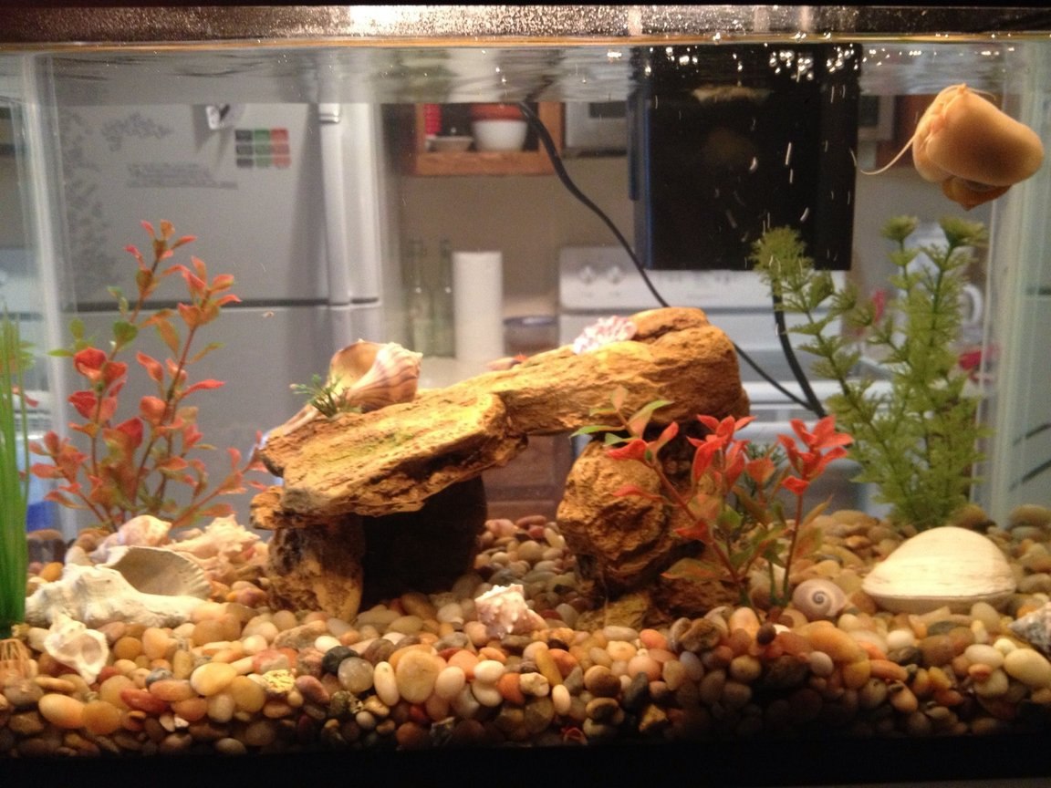 10 gallons freshwater fish tank (mostly fish and non-living decorations) - My own little world:)