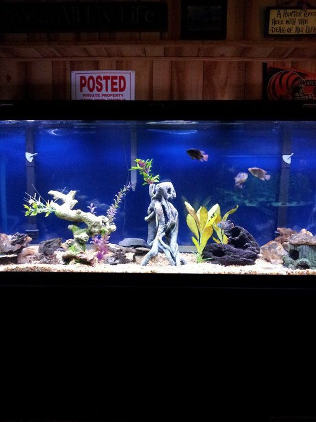 46 gallons freshwater fish tank (mostly fish and non-living decorations) - 150 g with juveniles. 1 Oscar, 1 jack Dempsey, 1 red texas, 1 green terror, 1 blackbelt cichlid, and an eclipse catfish