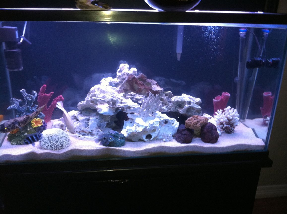 110 gallons freshwater fish tank (mostly fish and non-living decorations) - None
