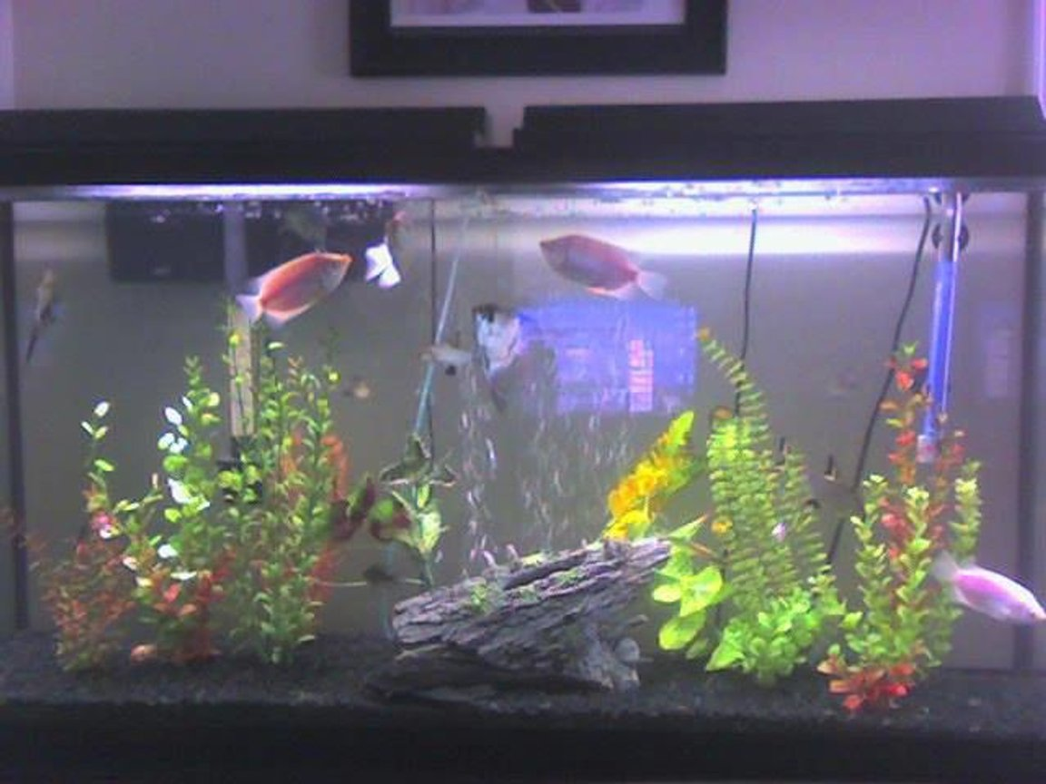 60 gallons freshwater fish tank (mostly fish and non-living decorations) - before the live plants