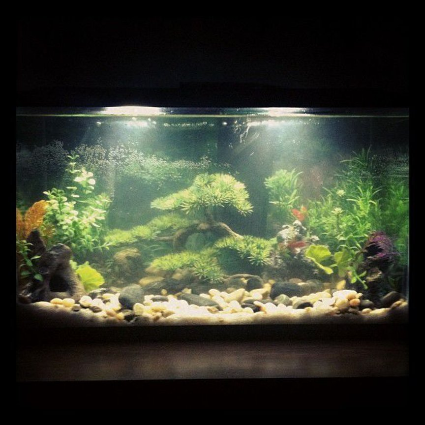 10 gallons freshwater fish tank (mostly fish and non-living decorations) - First tank