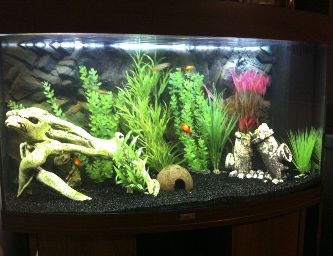 40 gallons freshwater fish tank (mostly fish and non-living decorations) - Overall view of my tank