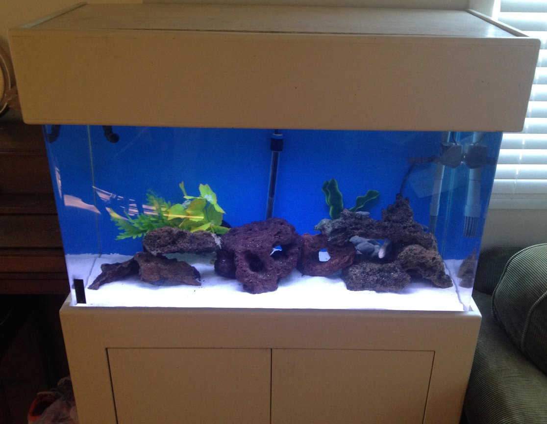 10 gallons freshwater fish tank (mostly fish and non-living decorations) - 55 Gallon fish tank with 4 African ciclids