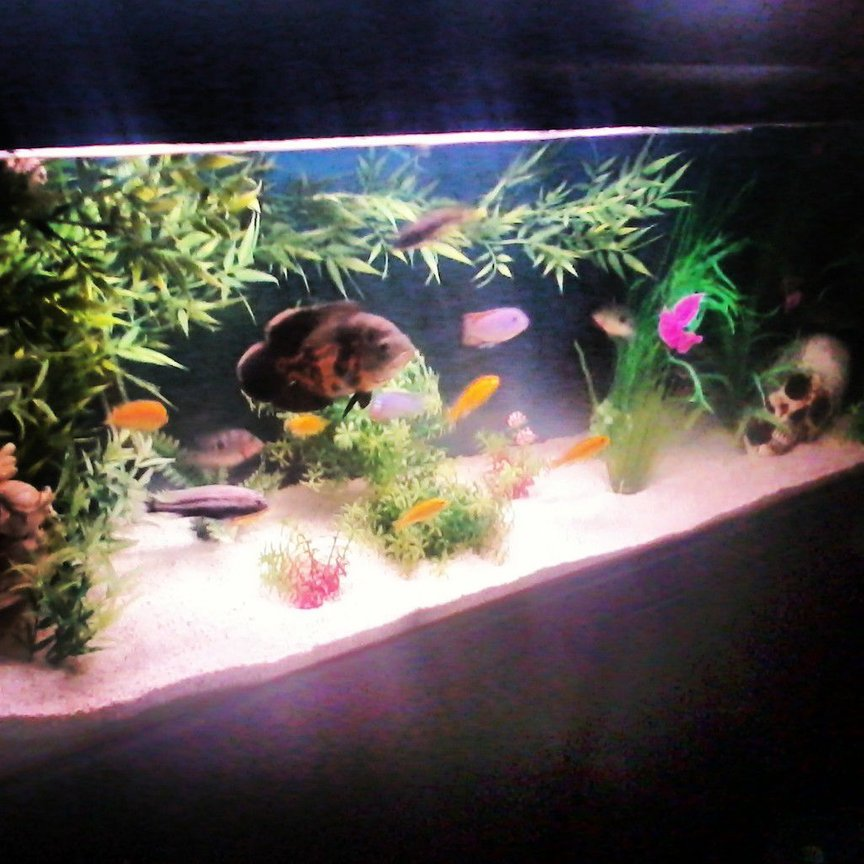 40 gallons freshwater fish tank (mostly fish and non-living decorations) - new cichlid tank