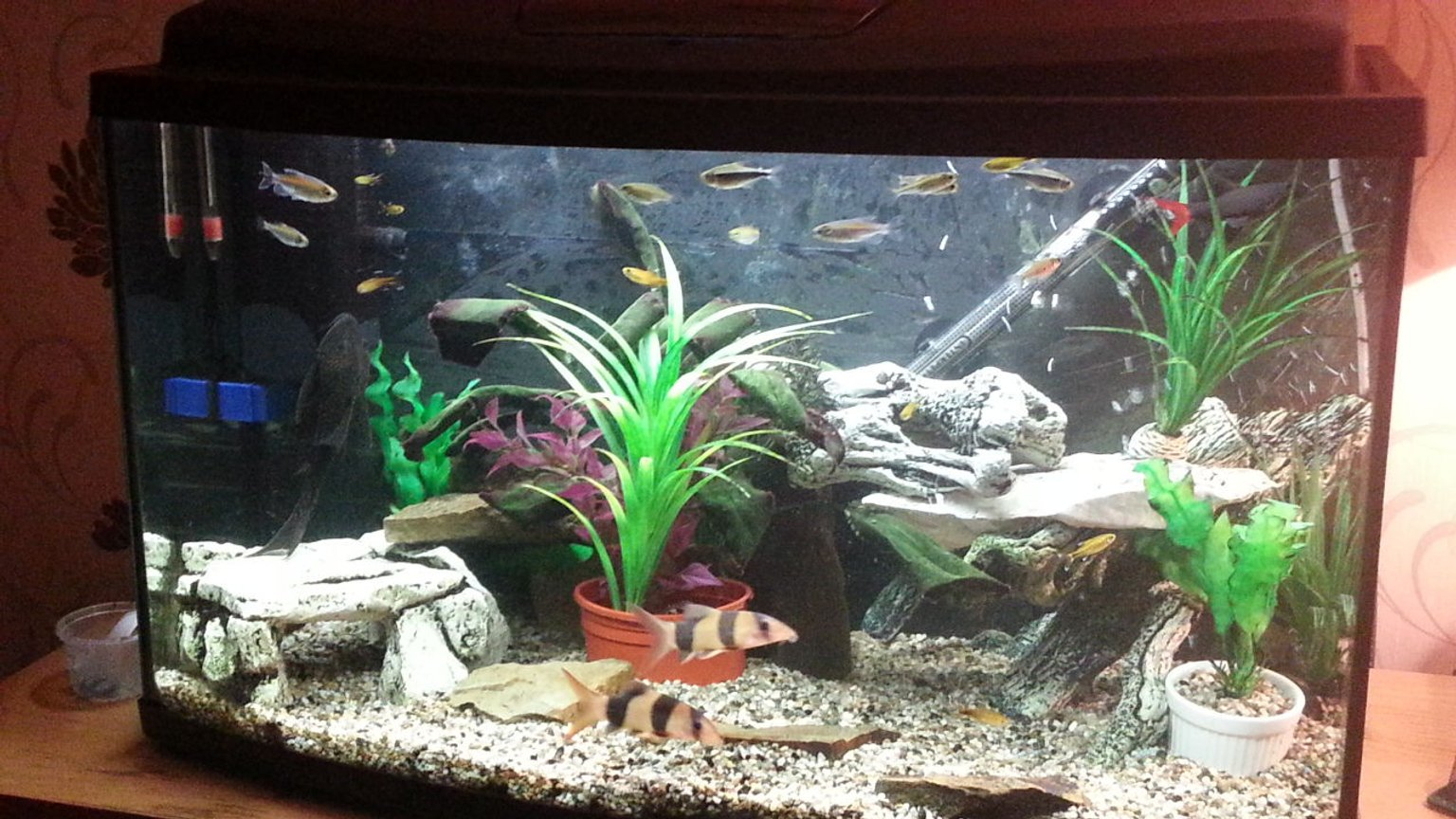 23 gallons freshwater fish tank (mostly fish and non-living decorations) - Trying to create a happy place for the loaches and shark while creating a bit of freedom for my tetras