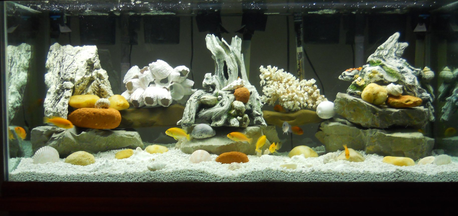 75 gallons freshwater fish tank (mostly fish and non-living decorations) - 75 gallon freshwater tank with multiple cichlids