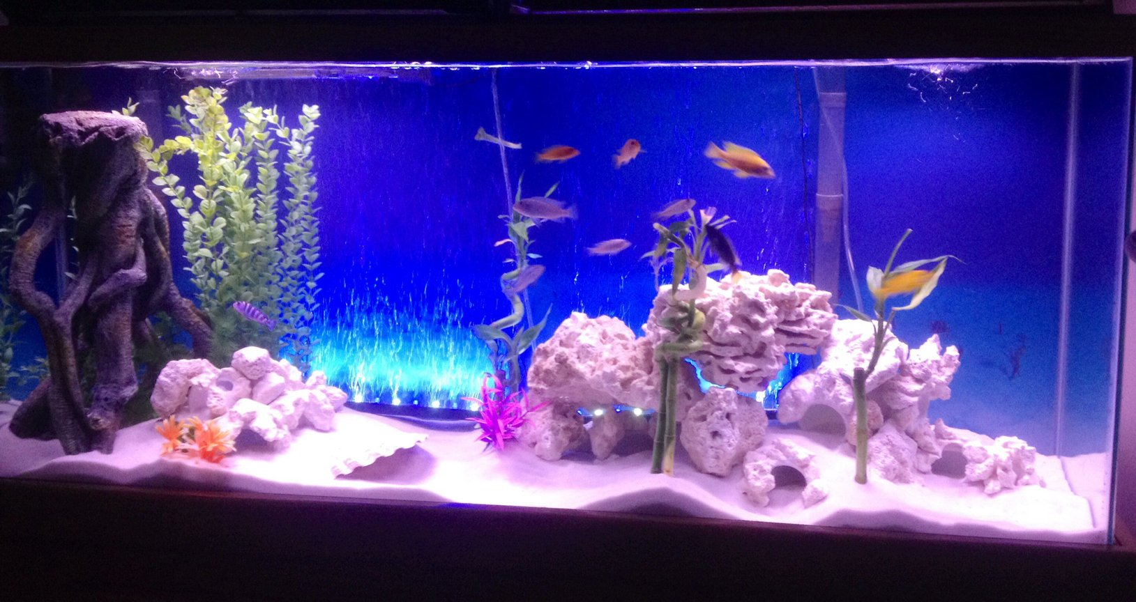 55 gallons freshwater fish tank (mostly fish and non-living decorations) - Reef rock in 55gal cichlid tank
