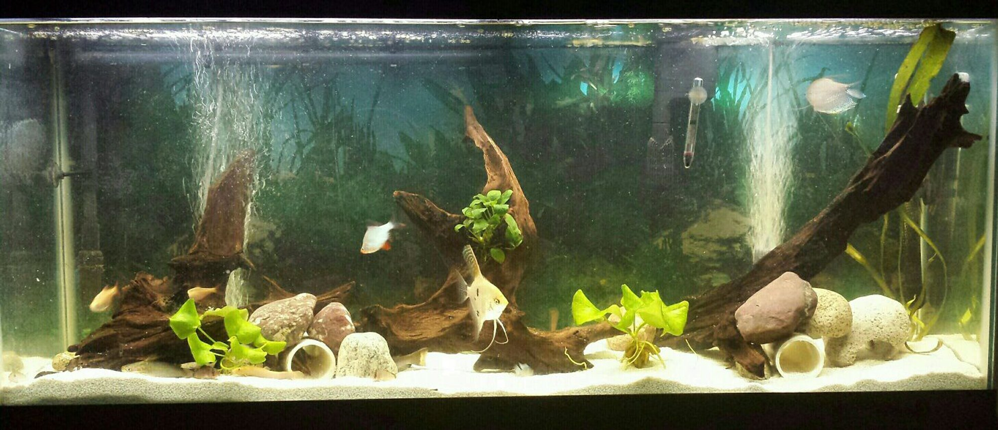55 gallons freshwater fish tank (mostly fish and non-living decorations) - Update on the tank. constantly trying to make a better place for my fish.