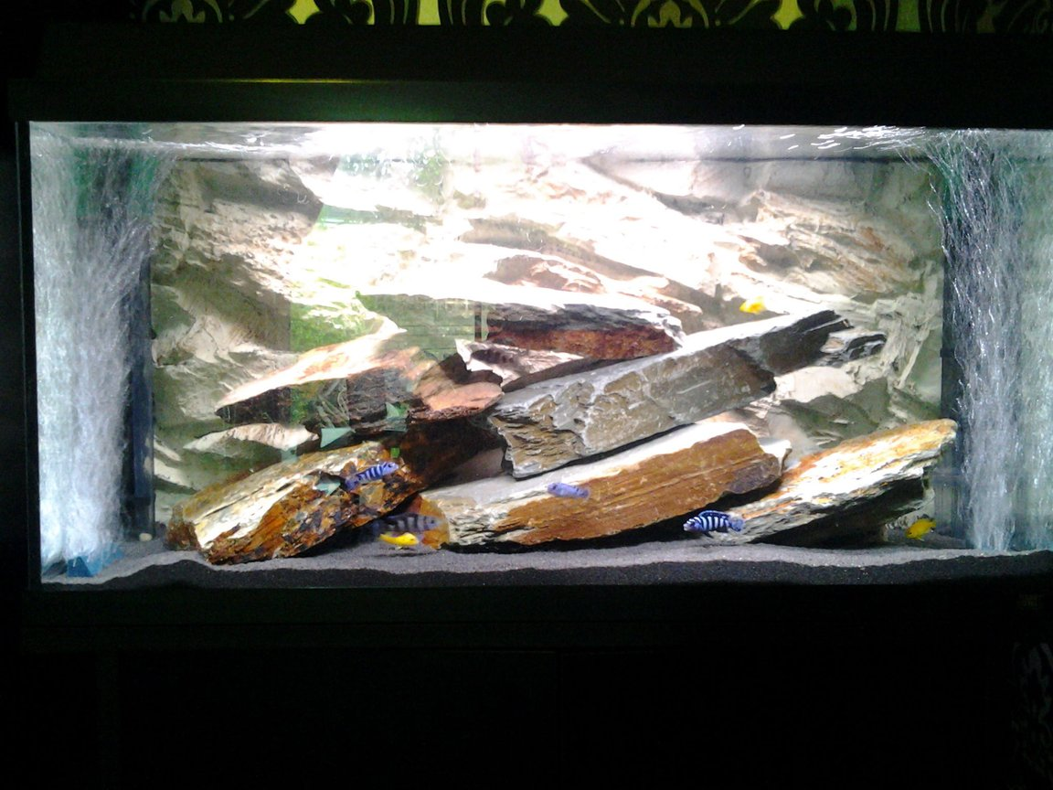 20 gallons freshwater fish tank (mostly fish and non-living decorations) - Cichlid tank