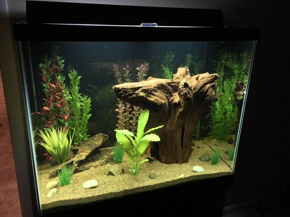56 gallons freshwater fish tank (mostly fish and non-living decorations) - 56 gallon freshwater.
