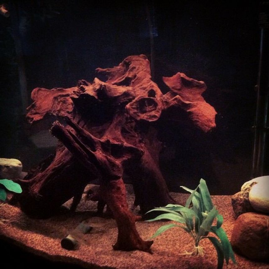 46 gallons freshwater fish tank (mostly fish and non-living decorations) - Big piece of driftwood the Tapajos love the tannin
