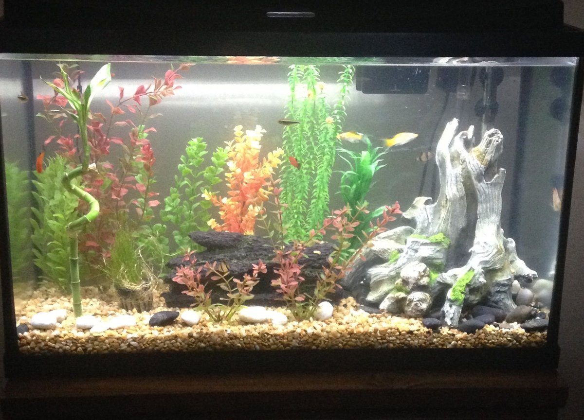 29 gallons freshwater fish tank (mostly fish and non-living decorations) - 29 gal community