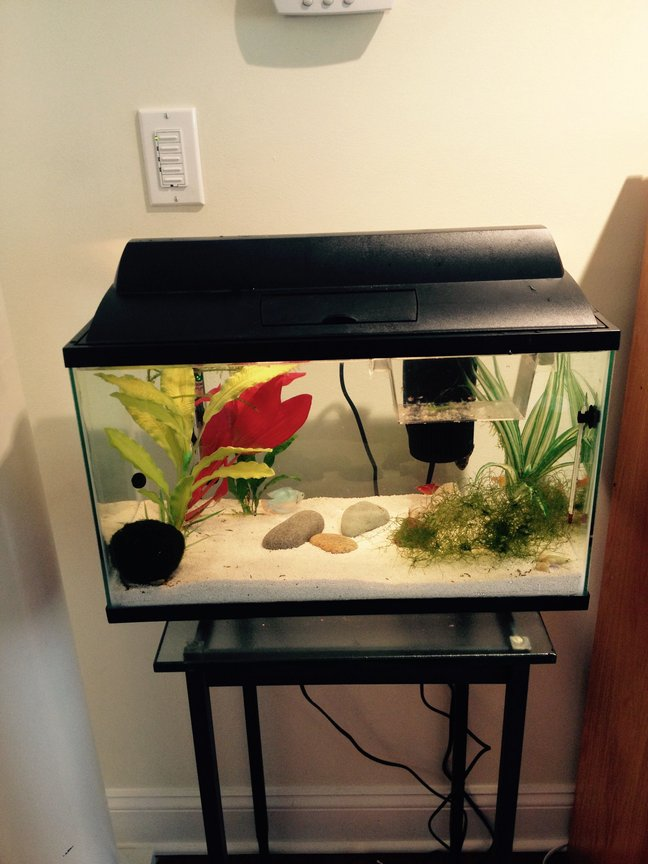 10 gallons freshwater fish tank (mostly fish and non-living decorations) - Tropical Community and Nursery