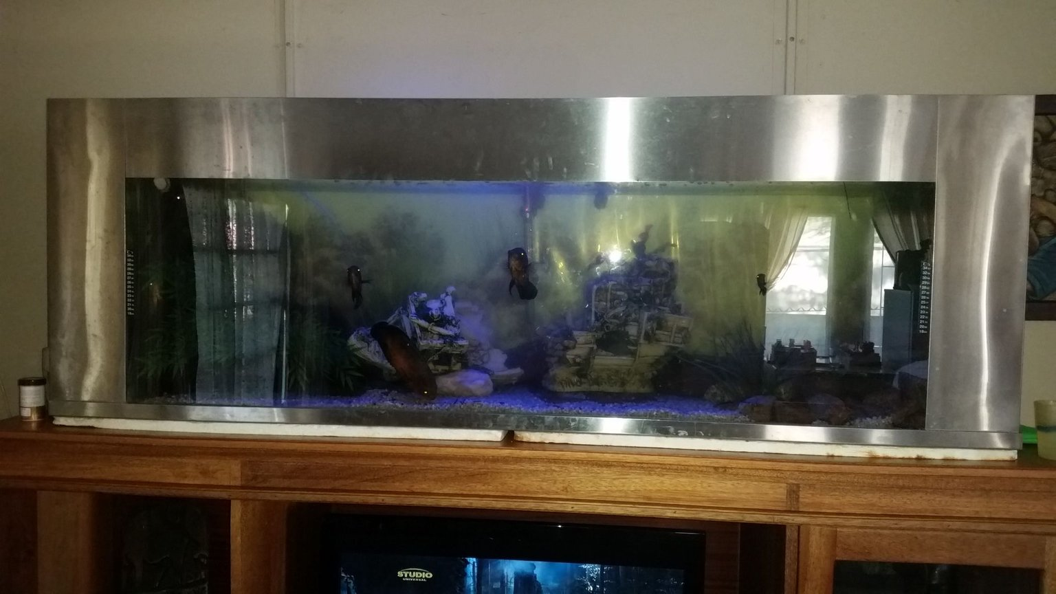 132 gallons freshwater fish tank (mostly fish and non-living decorations) - Fresh water tank with stainless steel trim