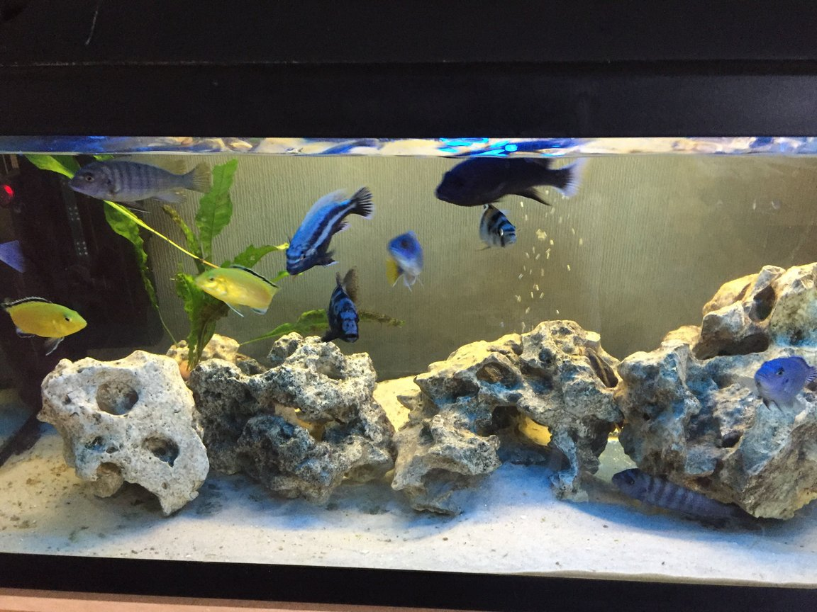26 gallons freshwater fish tank (mostly fish and non-living decorations) - Cichlid tank with white volcanic rock and white sand. Currently 2 x Internal filters, 2 x heaters and a bubble disc. Also un-seen are 2 x catfish and a pleco.